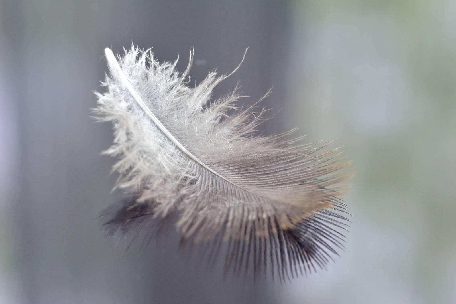 Картинка белые перышки