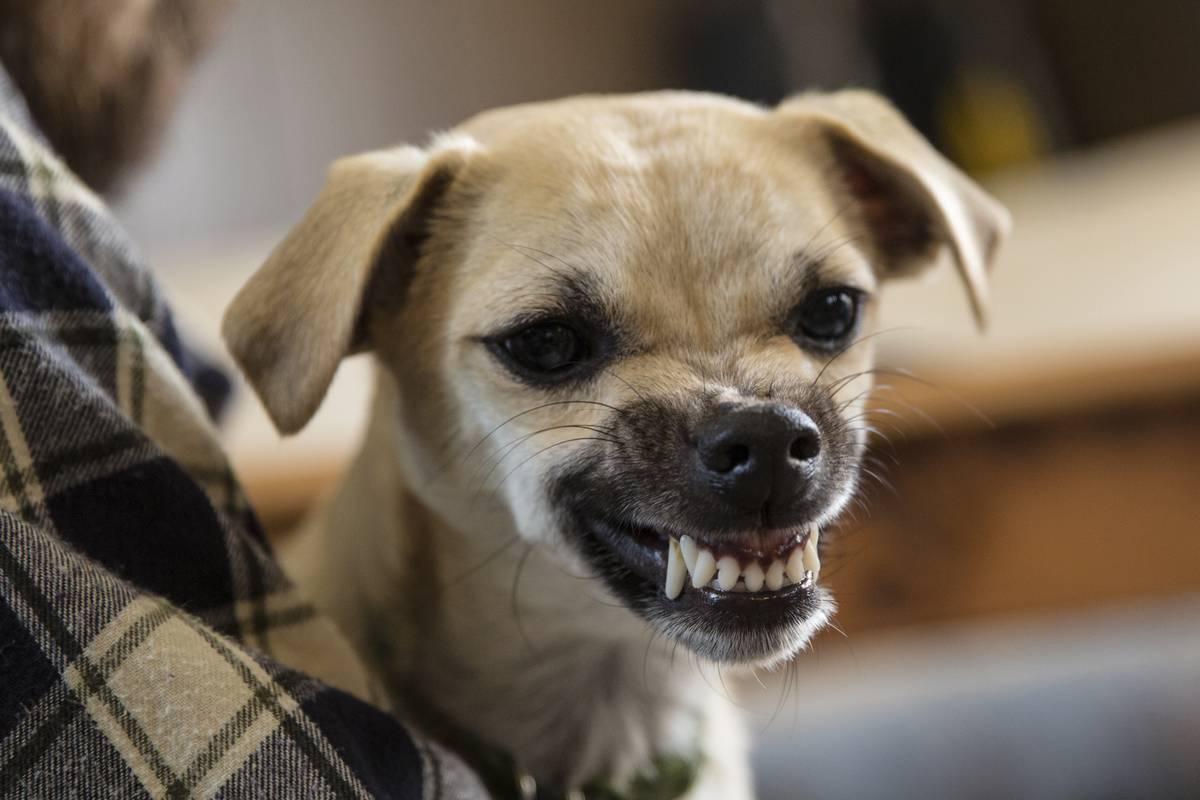 Злобная собака фото