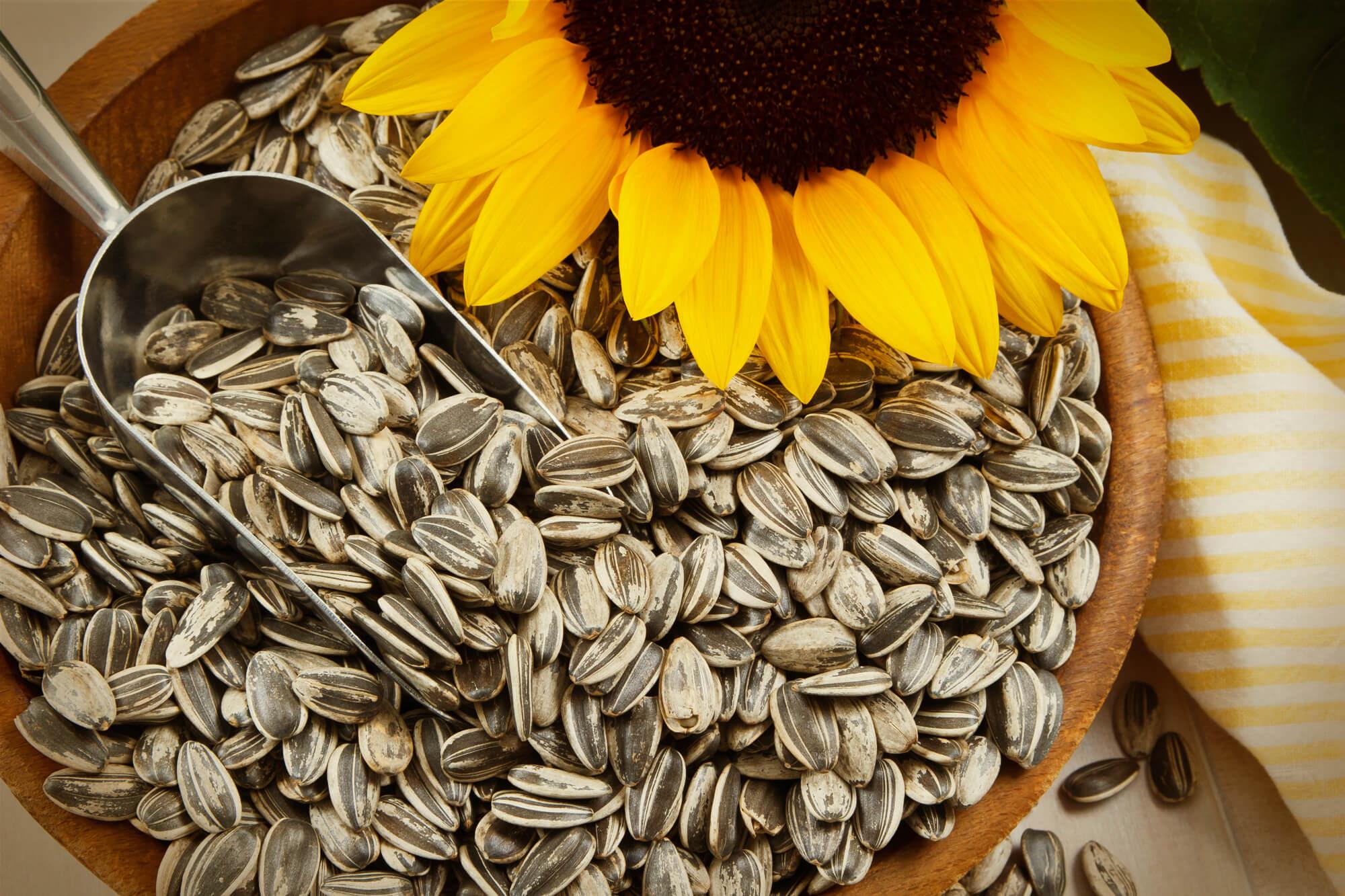 К чему снятся семечки подсолнуха - сонник черные, много семечек