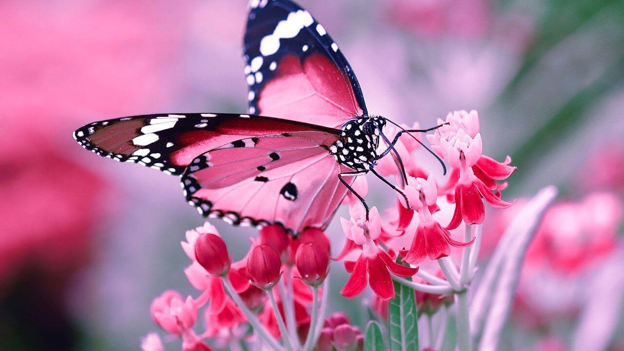 К чему снятся бабочки цветные, красивые - сонник. Видеть много бабочек во сне