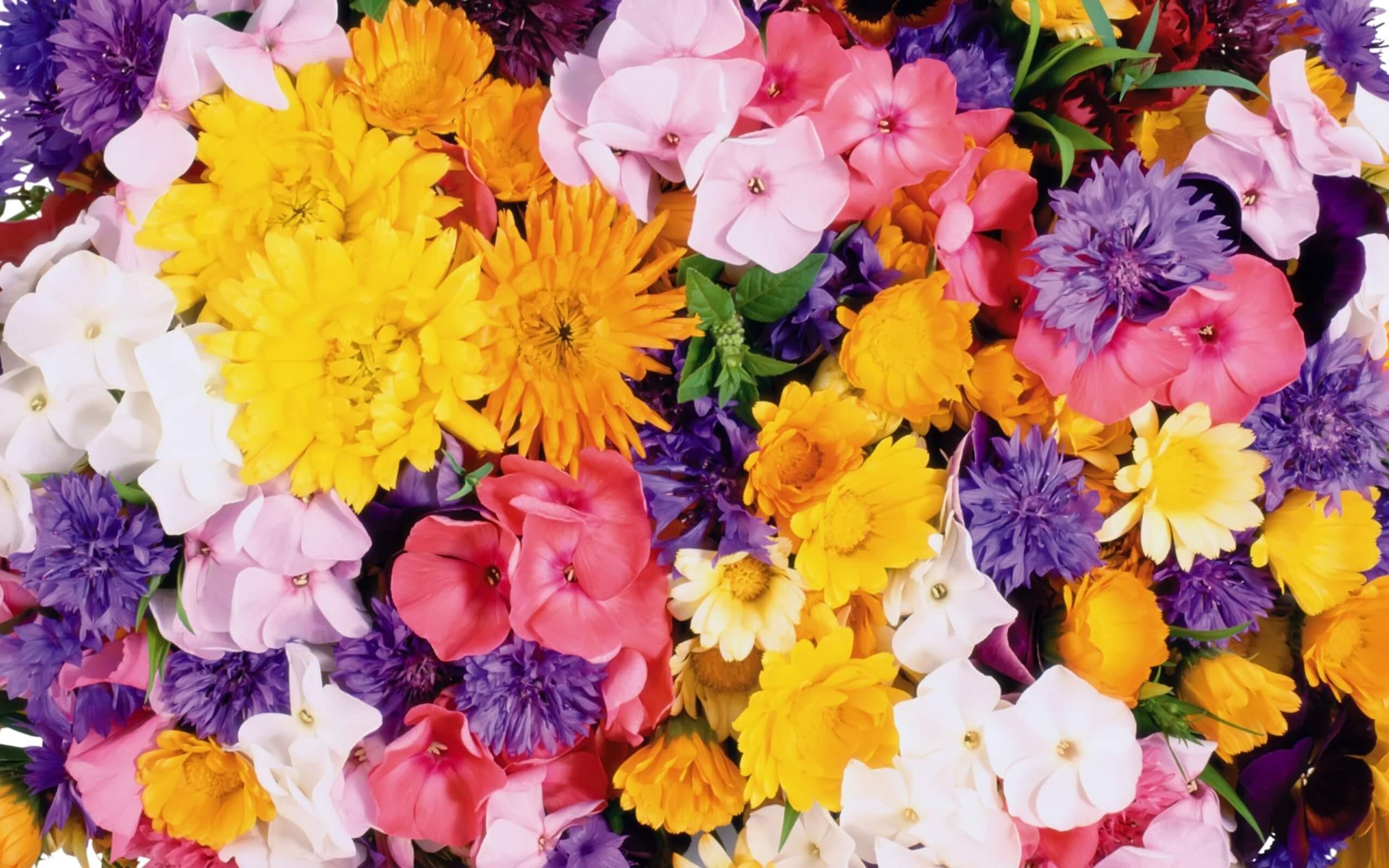 К чему снятся цветы во сне женщине - живые, комнатные, в букетах, в горшках