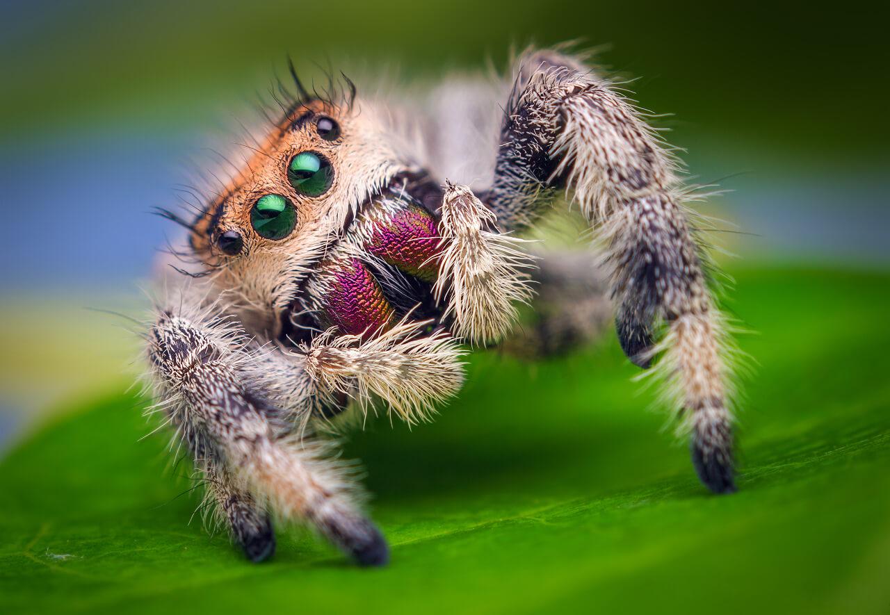 К чему снятся пауки во сне женщине и мужчине - сонник про больших, черных, маленьких пауков