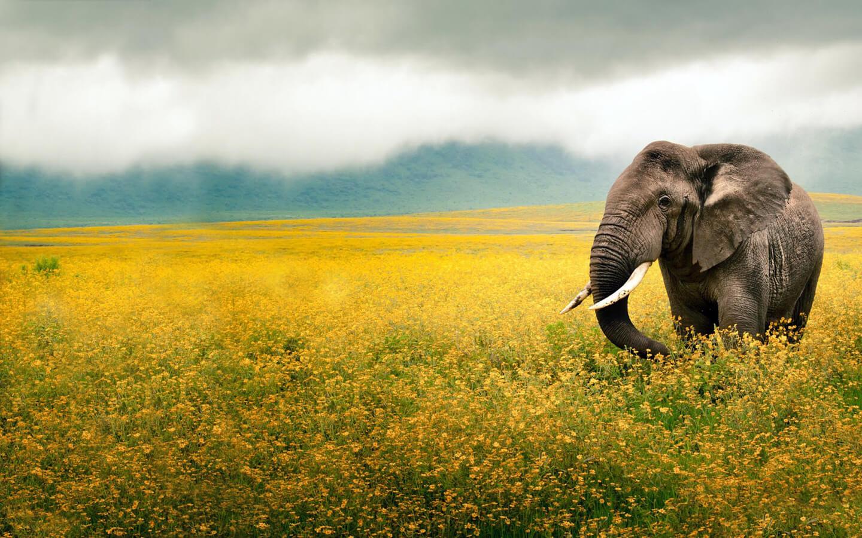 К чему снится слон женщине, мужчине, девушке - сонник и толкование