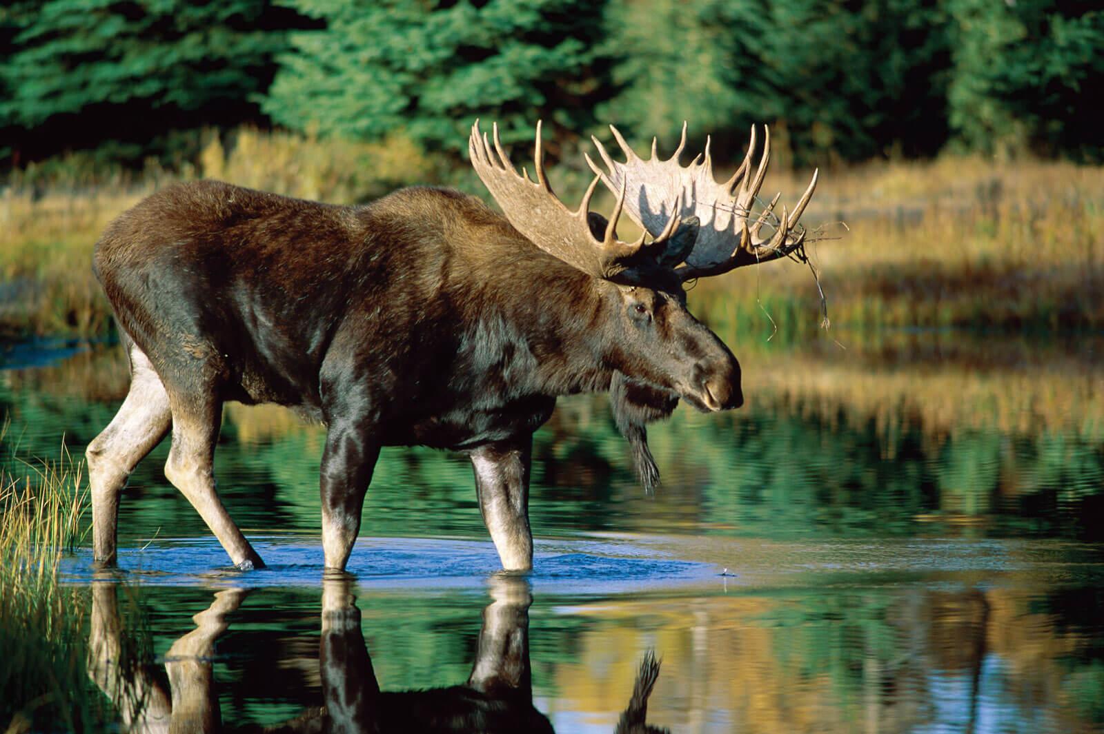 Природа и животные нашего края картинки