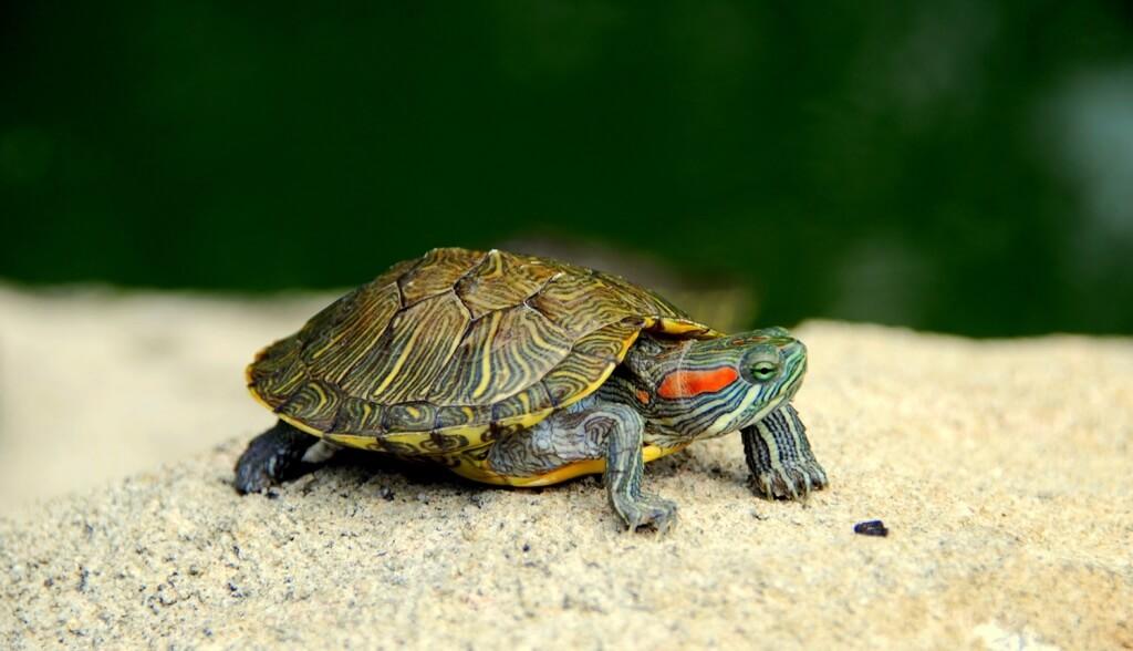 профессиональное фото с черепахами случилась