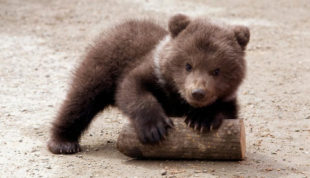 Ленусик открытка, медвежата на картинках