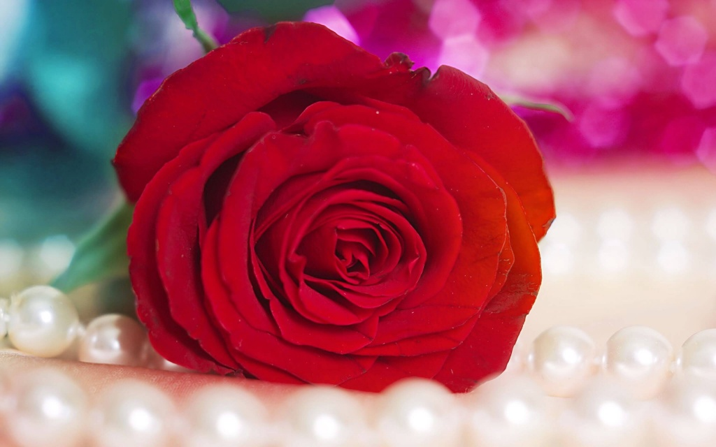 Красная роза.jpg