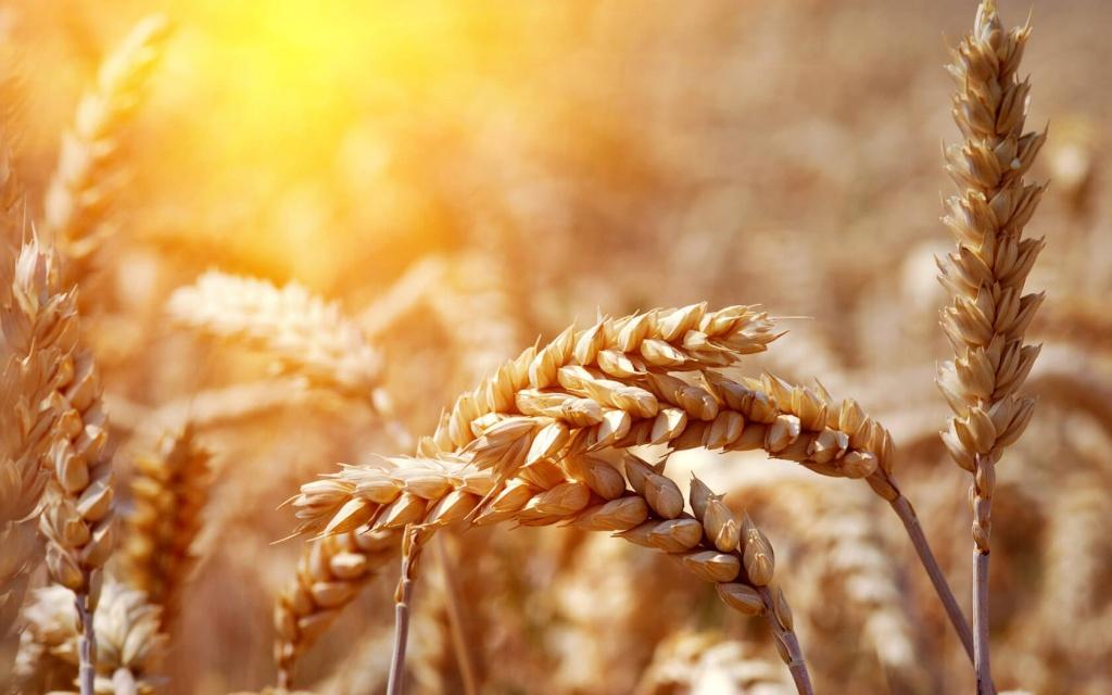 зерновые картинки для презентации городские фотографии