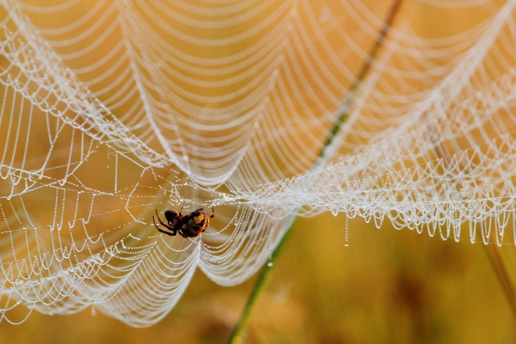 Картинки паутина и пауки