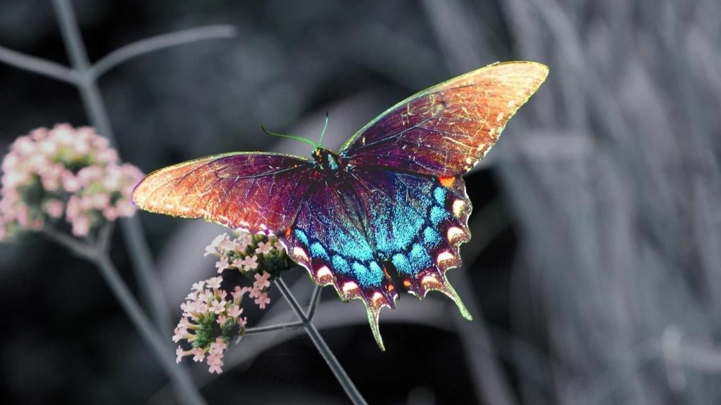 Бабочка во сне.jpg